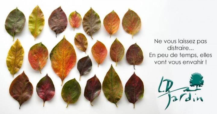 Vos jardins en automne