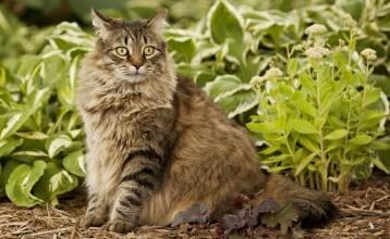 Jardinage : comment éloigner les chats de son potager