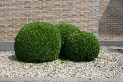 Entretien haies et arbustes